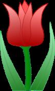 tulip for Calvinism